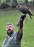 Greifvogelschau im Wildpark Gersfeld