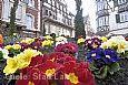 Blütensonntag in der Lahrer Innenstadt