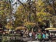 Öko-Bauernmarkt mit Erntedankfest