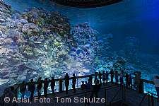 Great Barrier Reef - Panoramabild